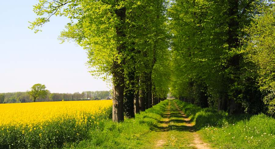 Tips voor De Brabantse Kempen